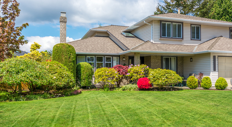 lawn care and stump grinding